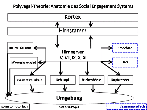 Porges: Die Polyvagal-Theorie - Emotion, Bindung, Kommunikation und ...